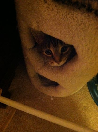 Sloan's Cat 1