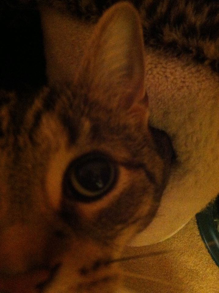 Sloan's Cat 2