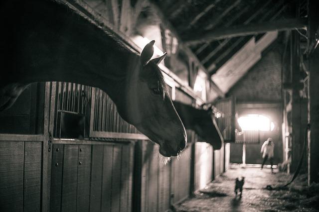 horses-786239_640